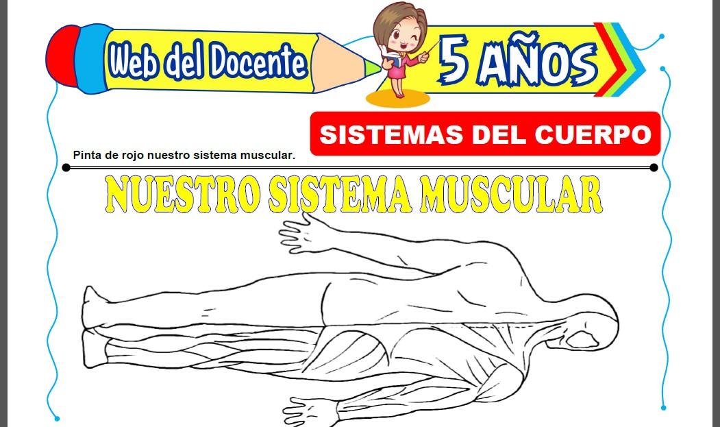 Sistemas del Cuerpo Humano para Niños de 5 Años