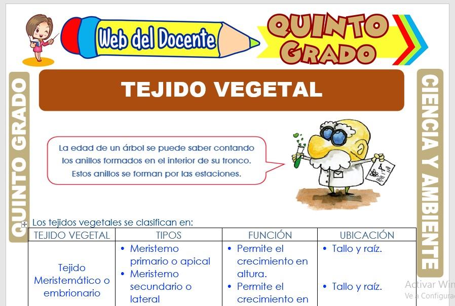 Ficha de Tejido Vegetal para Quinto Grado de Primaria