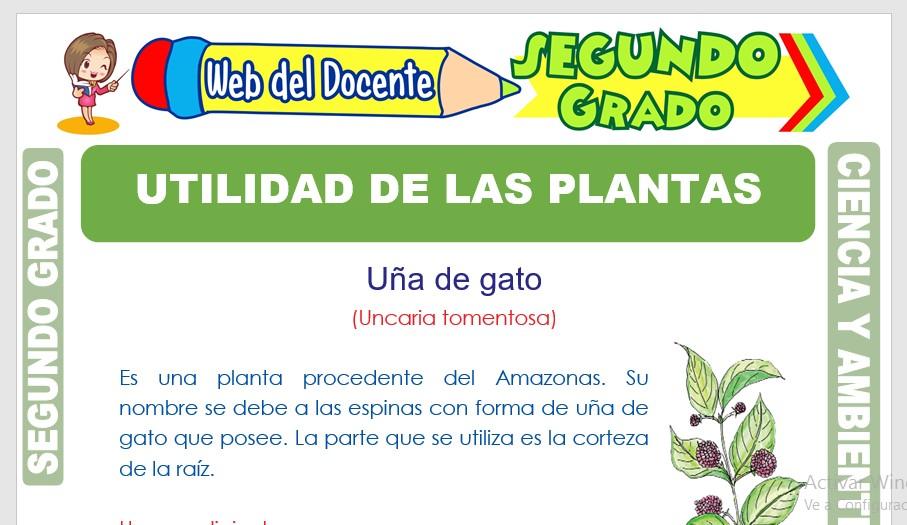 Ficha de Utilidad de las Plantas para Segundo Grado de Primaria